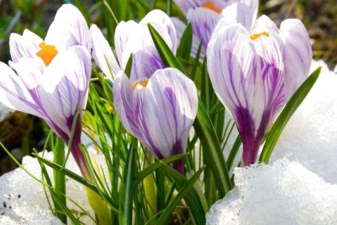 Синоптики: потепління буде, але нескоро. В квітні прогнозують сніг