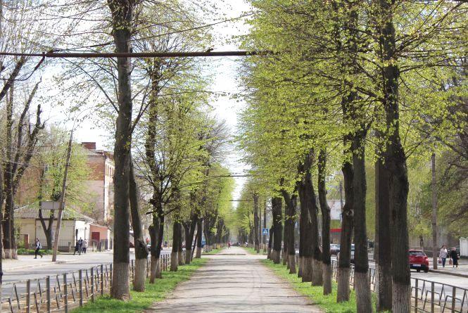 Зміни Замостянської: старі дерева знесуть, а нові посадять (ОПИТУВАННЯ)