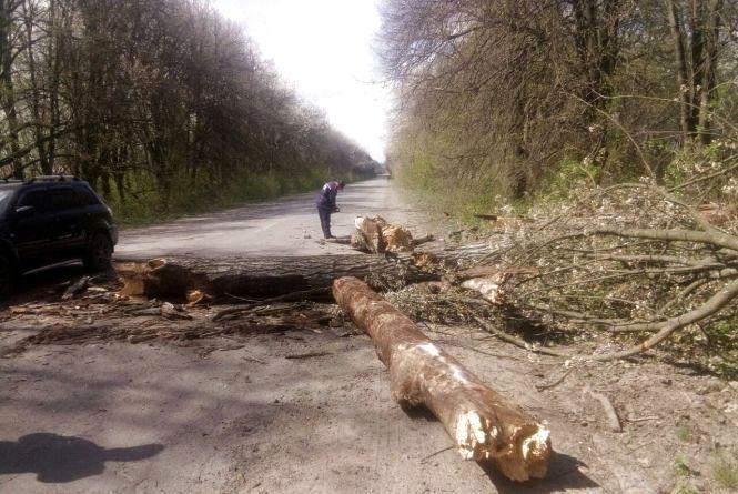 Весняний буревій: 17 повалених дерев. Якого ще лиха наробила погода?