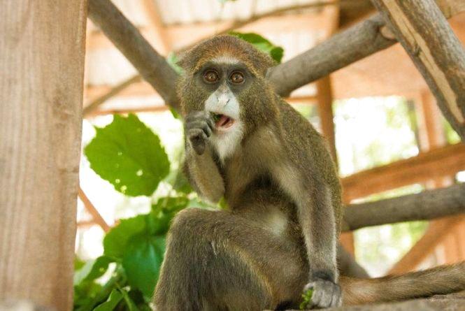 У Подільському зоопарку новий мешканець. Питають, як назвати?