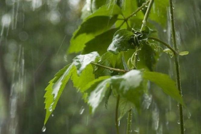 Дощі та похолодання: вінницькі синоптики дали прогноз до кінця квітня