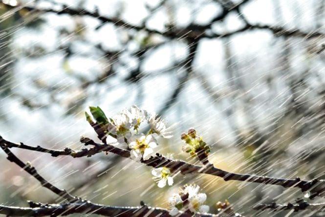 Яку погоду чекати вінничанам 27 квітня. Прогноз