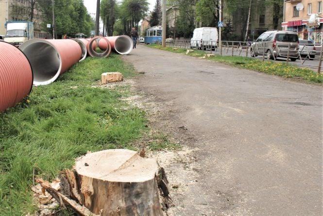 На Замостянській зрубали старі дерева. Хто це робить і навіщо?