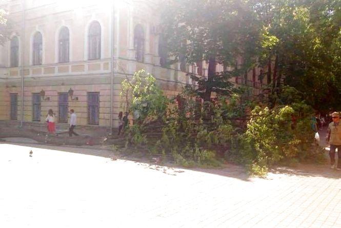 У центрі Вінниці на дівчинку впало дерево. Вона у лікарні