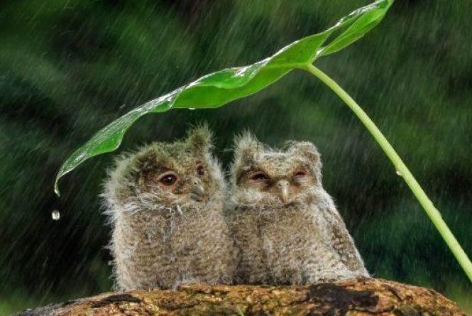Вітер, дощ та похолодання: синоптик поділилася прогнозом на 26-30 травня