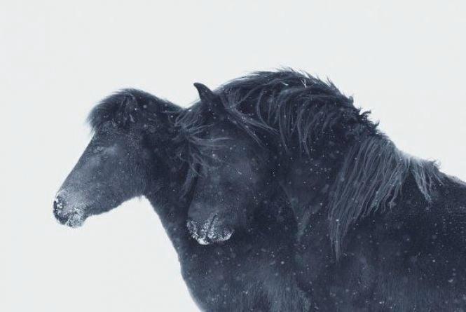 Небесні коні (Новини компаній)