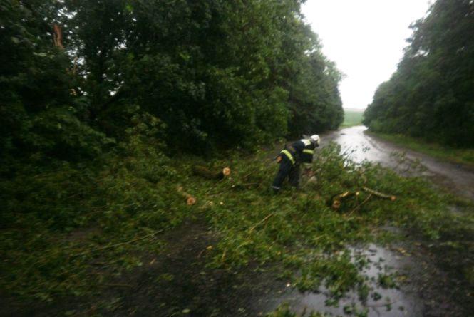 Наслідки негоди: вітер валив дерева на стовпи, авто та дороги