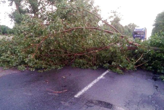 Негода на Вінниччині: де падали дерева та завалювали дорогу?