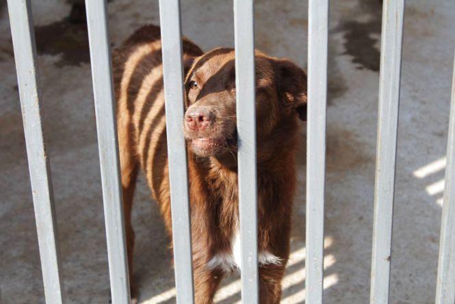 Притулок для собак на Гонти закупив шприцемети для відлову тварин