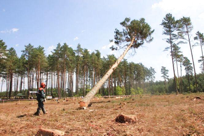 На Вінниччині під час валки лісу загинув чоловік. Справу передали поліції