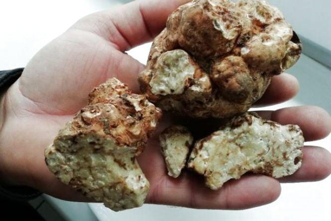 На Вінниччині у лісі чоловік випадково знайшов «золоті» гриби