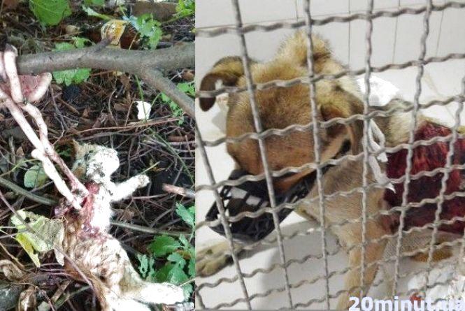 Собака померла, котенят вбили. У Вінниці шукають живодерів (ФОТО 18+)