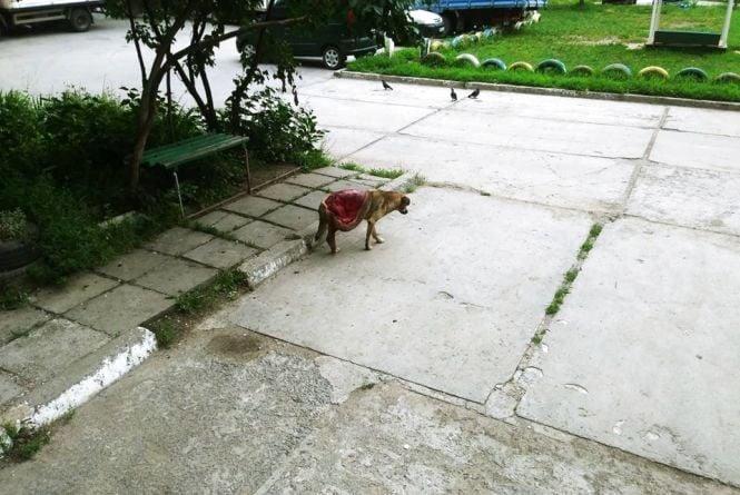 У Вінниці збираються захисники тварин на акцію в пам'ять про загиблих собак
