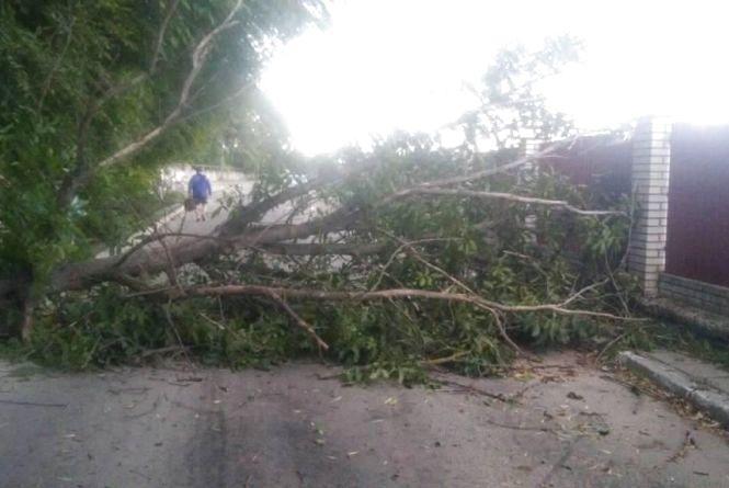 Наслідки негоди: повалені дерева утворювали затори, а також одне із них впало на Nissan