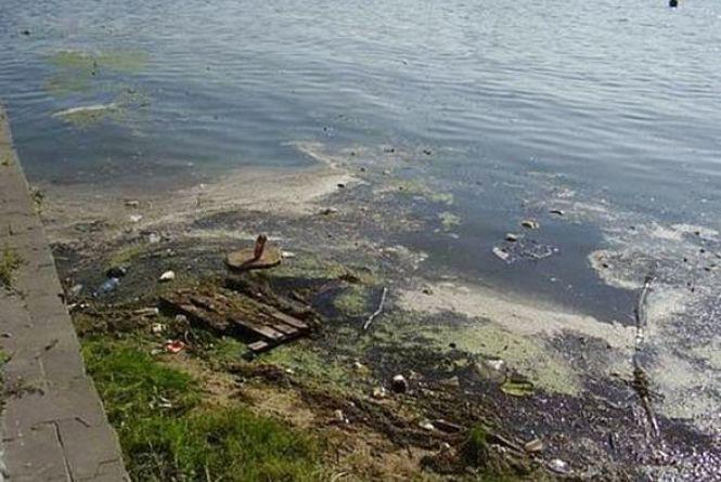 Петиції: Південний Буг пропонують очищати за допомогою водорості хлорела