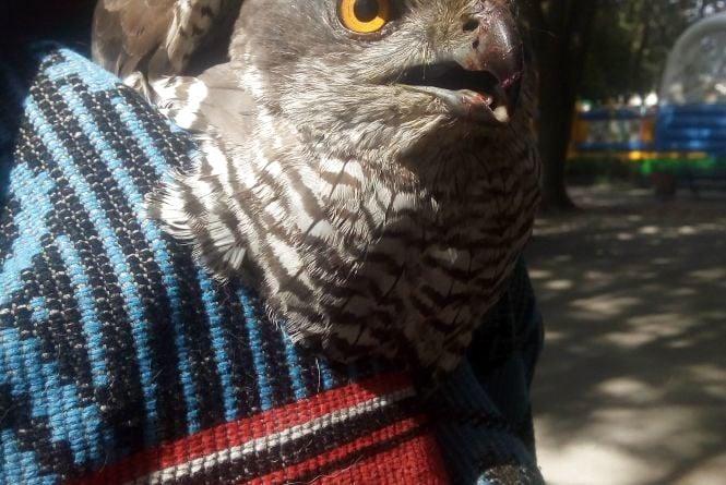 Вінничанка знайшла хижого птаха біля дитячого садочка