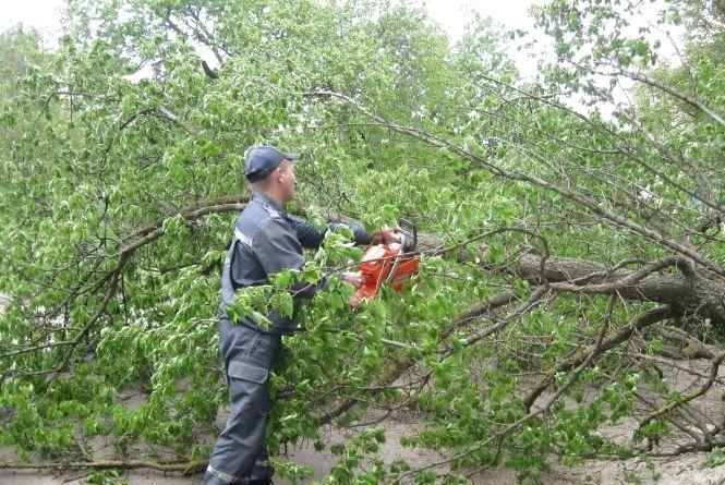 Негода на Вінниччині: у Ладижині впало дерево та перекрило рух