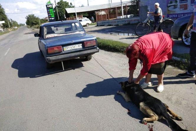 У Бершаді прив'язали собаку до бампера авто і хотіли вивезти за місто (ОНОВЛЕНО)