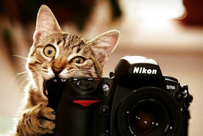 Скільки коштує осіння фотосесія? Десять вінницьких фотографів про ціни та локації