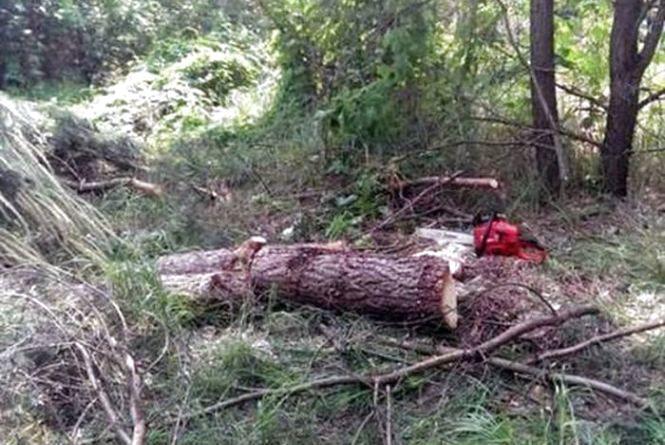 Жахлива трагедія: 31-річний лісоруб стік кров'ю, поки чекав лісника
