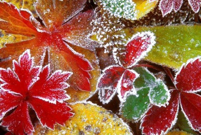 На Вінниччині прогнозують заморозки: прогноз погоди на вихідні