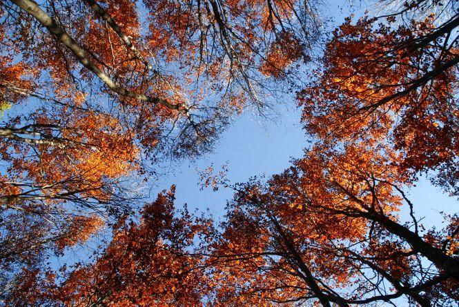 Прогноз погоди у Вінниці на сьогодні, 11 жовтня