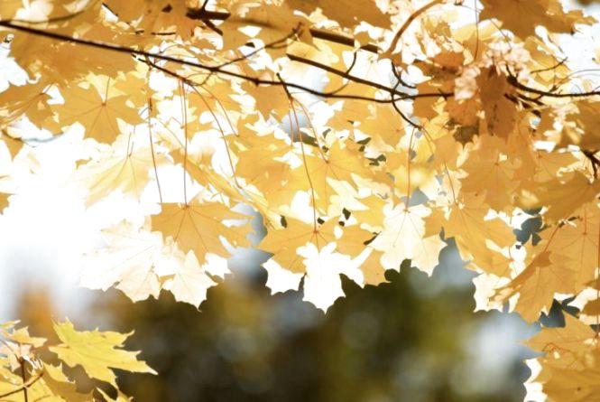 Сонце, туман та вітер: синоптик про погоду в Україні на 12 жовтня