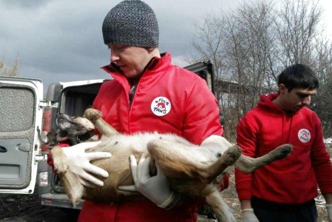 Стерилізація, вакцинація та інше: у Вінниці взялися за безпритульних тварин