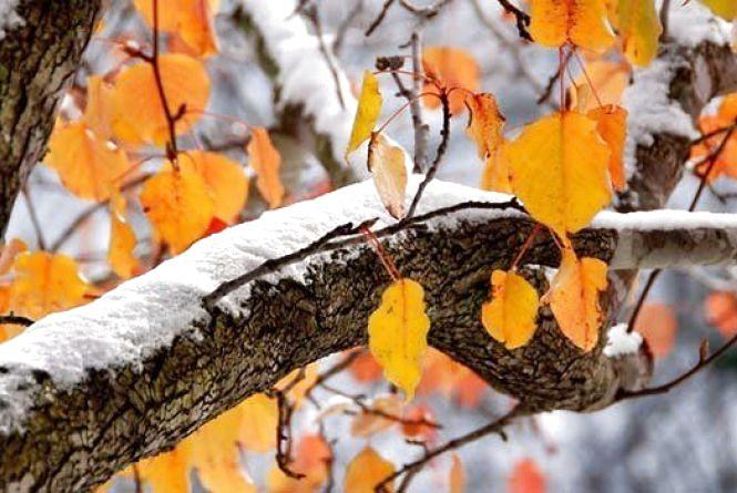 Синоптики дали прогноз погоди на листопад в Україні