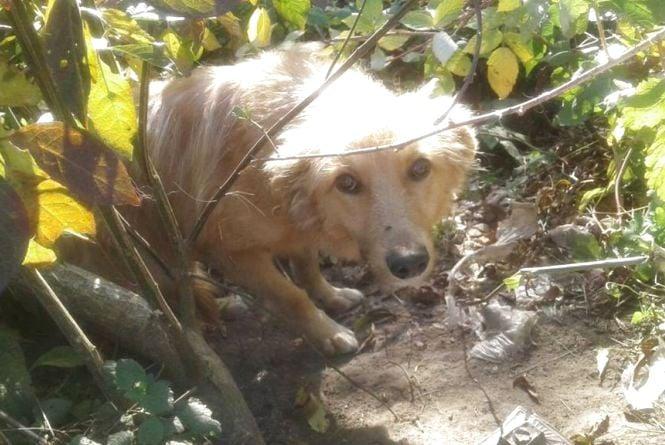 Віддано чекає уже з місяць. На Вінниччині господар вивіз до лісу пса