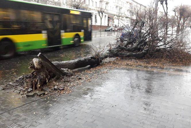 Негода бушує: комунальники просять вінничан залишити своє авто вдома