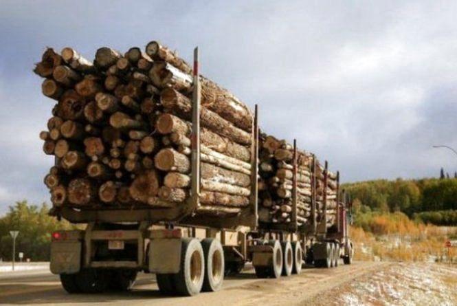Від гармонізації законодавства до збереження лісів