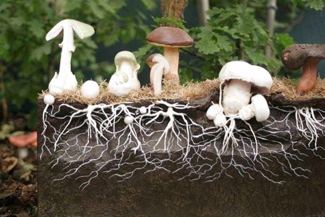 Выращивание грибов самостоятельно (Новости компании)