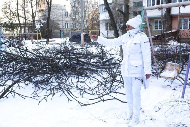 Замість дерев – парковка? Чому вирубують дерева у дворі на Скалецького