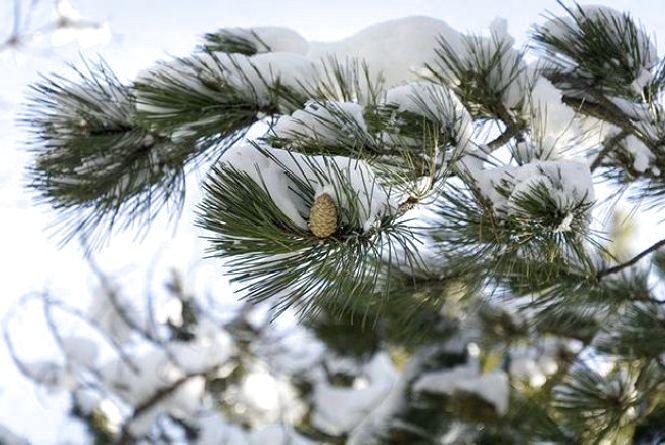 Погода на 7 грудня: синоптик розповіла, що стане родзинкою п'ятниці