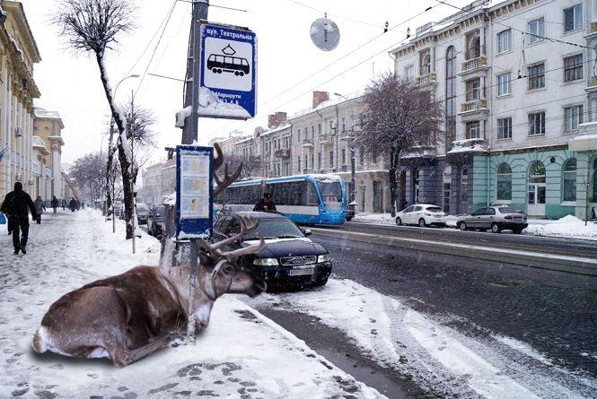 Обережно, «олені» на дорогах! Фоторепортаж із центру Вінниці