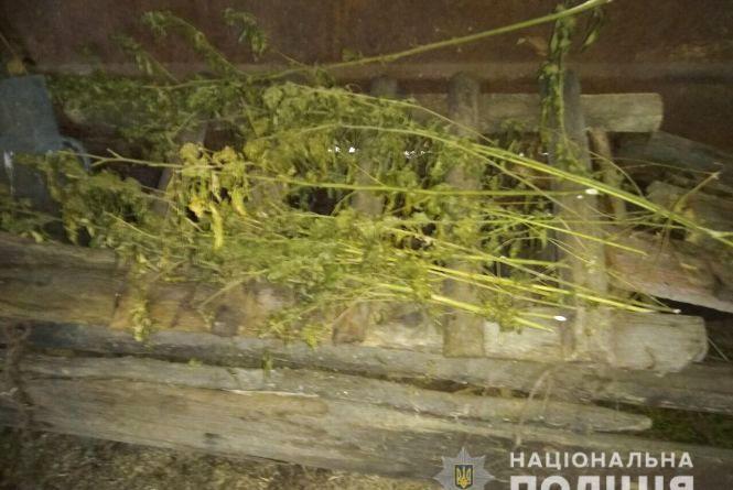 Житель Погребищенського району «знайшов» три кілограми коноплі