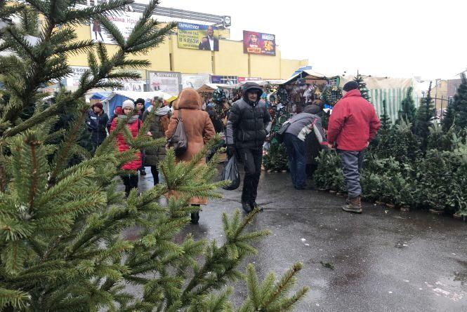Де та за скільки придбати новорічну ялинку у Вінниці?