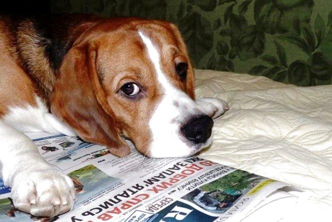 Рятували «Хатіко», ловили зооманіяків і обрали найкращого пса. Чуттєві історії року собаки