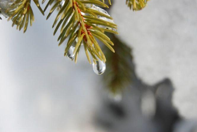 Потепління, відлига та знову морози: синоптик розповіла про погоду в Україні