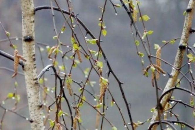 Грози, дощі і похолодання: середина квітня піднесе сюрпризи