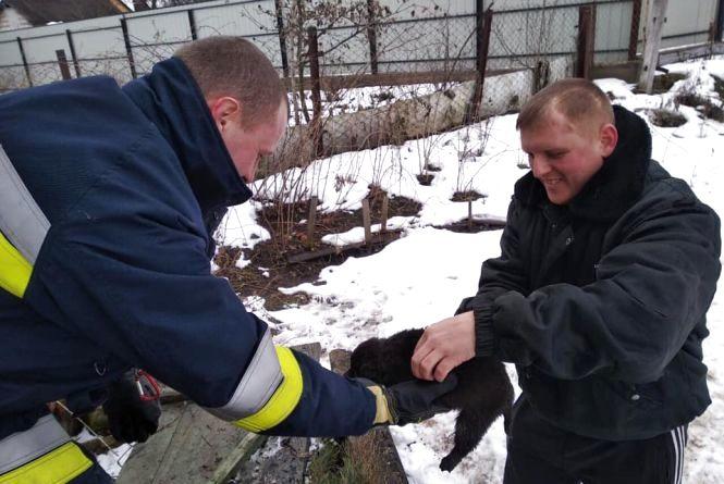 Щасливий порятунок: нелюди викинули цуценят помирати у вигрібну яму