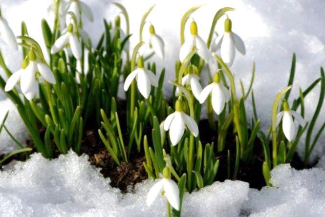 Яку погоду прогнозують вінницькі синоптики на найближчі дні?