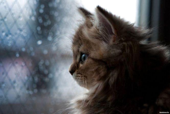 «Вівторок несе в Україну складну погоду». Очікується дощ та штормовий вітер