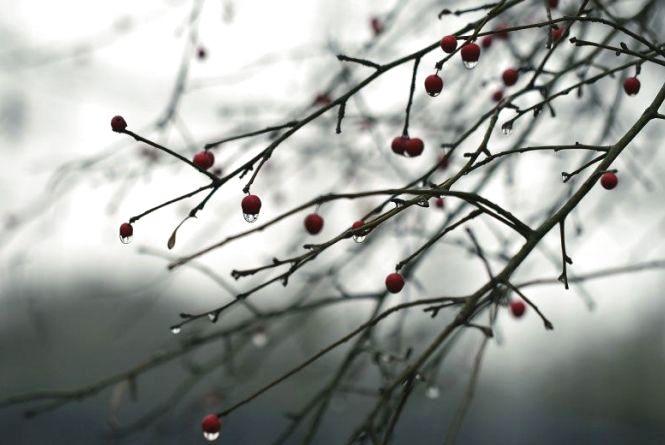 Прогноз погоди у Вінниці на сьогодні, 13 лютого