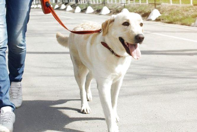 Зоопетиції: зони для вигулу собак та прибирання після них