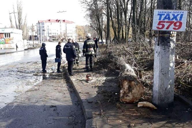 Трагедія у Вінниці: на Тяжилові дерево впало на дитину. Дівчинка загинула