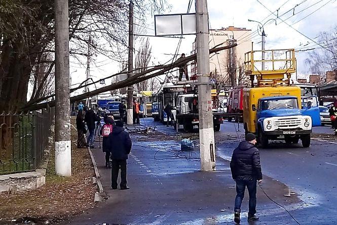 Буревій повалив дерево на дорогу в районі «Водоканалу»