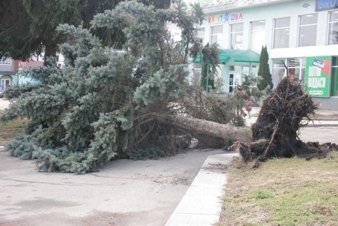 Зірваний дах та повалені дерева: наслідки буревію у Калинівці