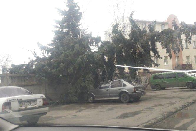 Вітер зриває дерева і стовпи: наслідки негоди у Вінниці